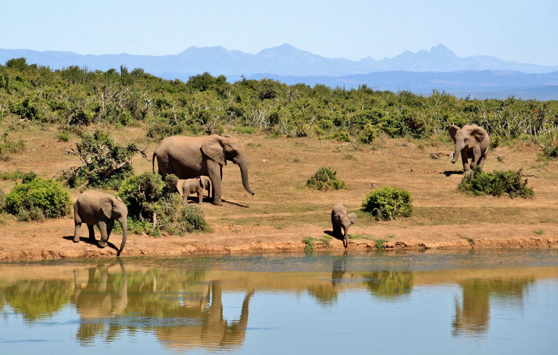 Excursii Africa de Sud