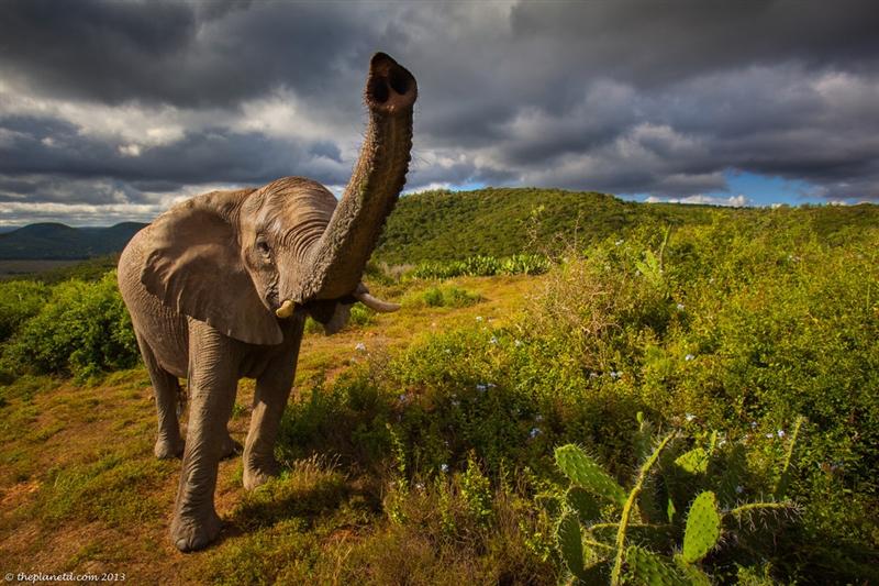 Africa de Sud