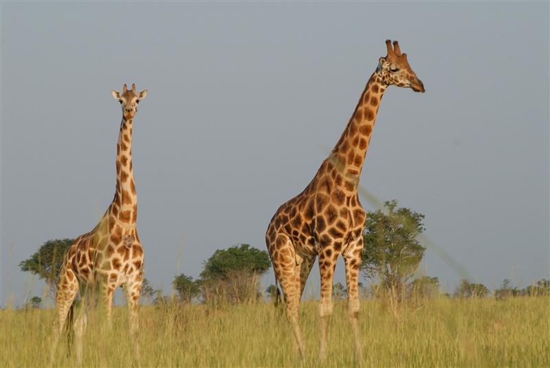 Rwanda si Uganda