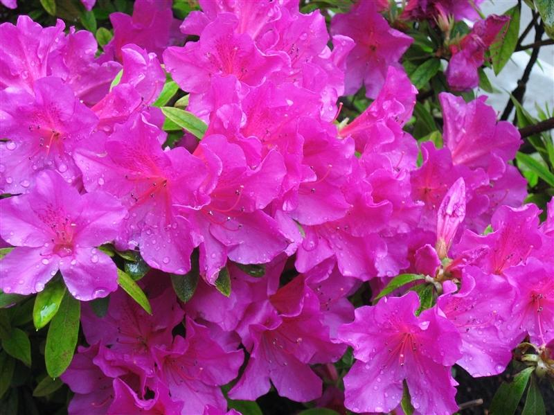 Circuit Japonia Florilor de Mai