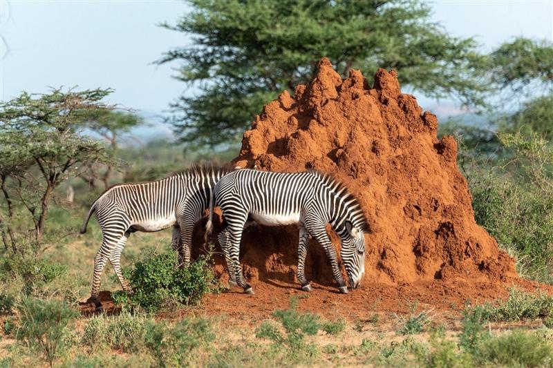 Revelion in Kenya