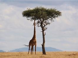 Circuit Kenya · Circuit Kenya