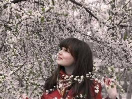 Japonia - Spectacolul Florii de Cires · Japonia - Spectacolul Florii de Cires
