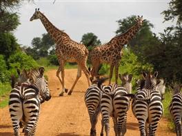 Safari Tanzania si sejur Zanzibar · Safari Tanzania si sejur Zanzibar